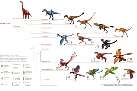 Velociraptors Were Fully Feathered Science Based Life
