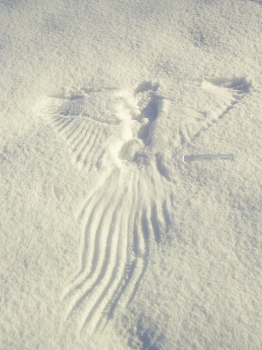 Wingprint
